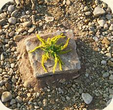 Steinmetzarbeit auf geomantischem Kraftpunkt